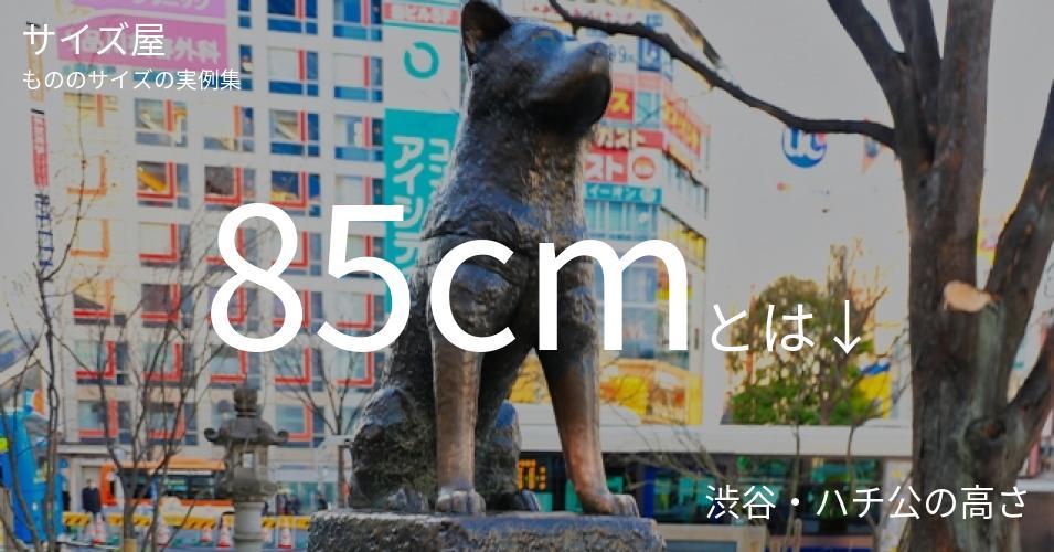 85cmとは「渋谷・ハチ公の高さ」くらいの高さです