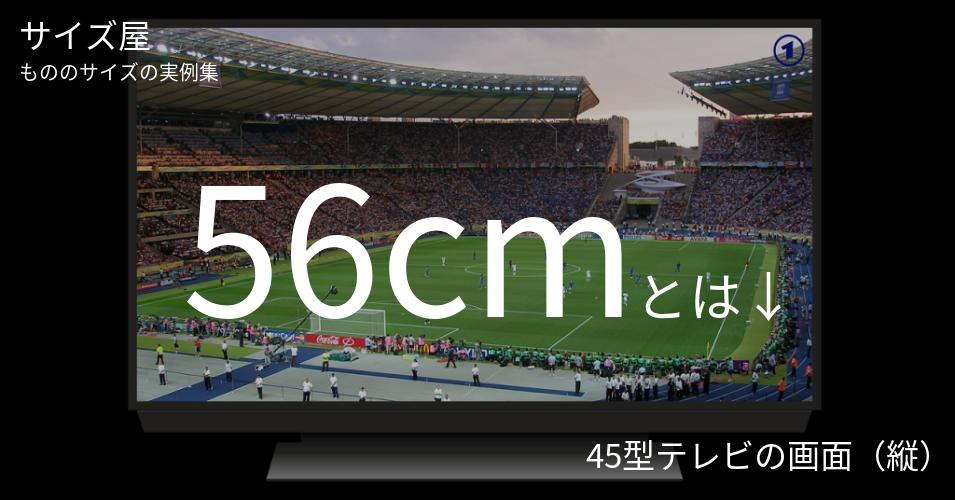 56cmとは「45型テレビの画面(縦)」くらいの高さです