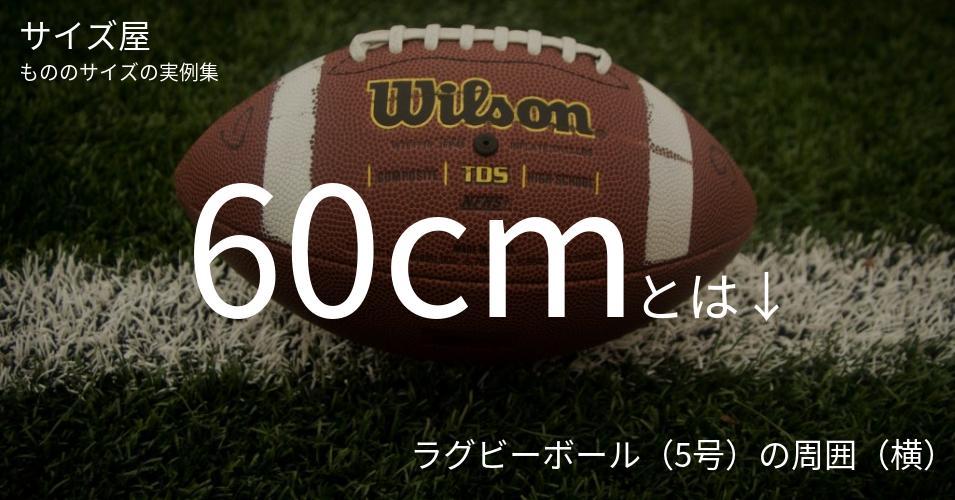 60cmとは「ラグビーボール(5号)の周囲(横)」くらいの高さです