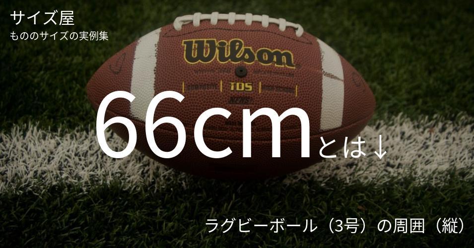 66cmとは「ラグビーボール(3号)の周囲(縦)」くらいの高さです
