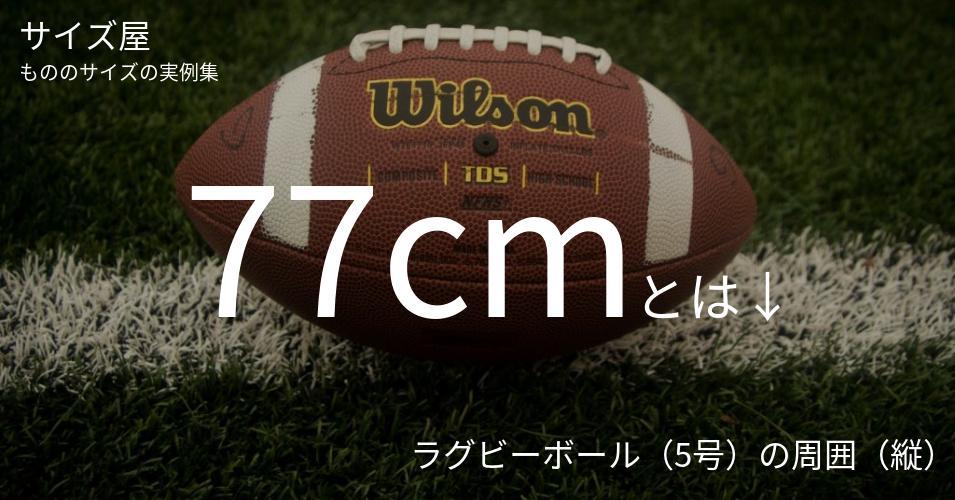 77cmとは「ラグビーボール(5号)の周囲(縦)」くらいの高さです