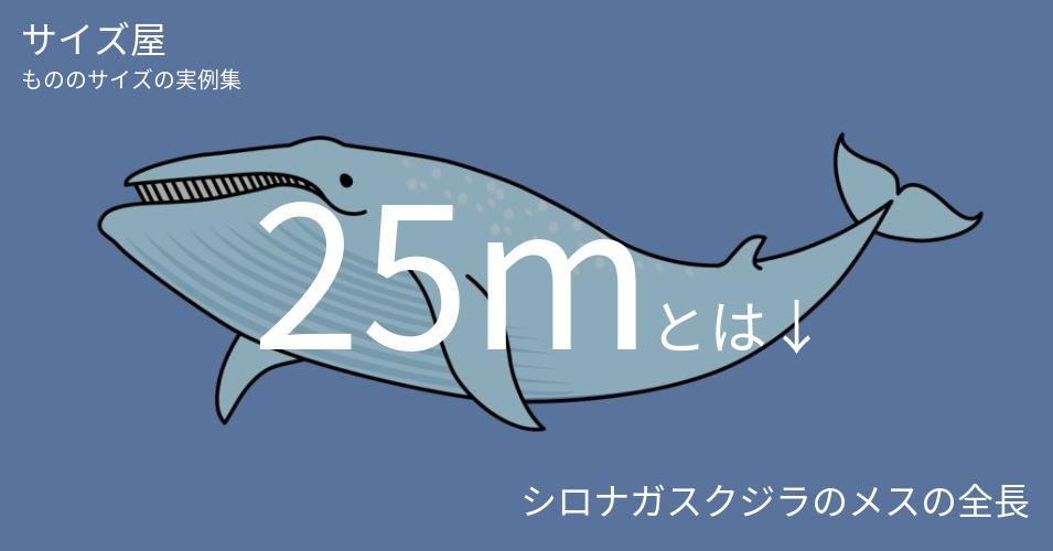 25mとは「シロナガスクジラのメスの全長」くらいの高さです