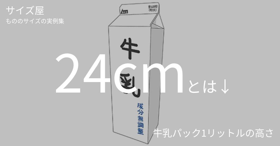24cmとは「牛乳パック1リットルの高さ」くらいの高さです